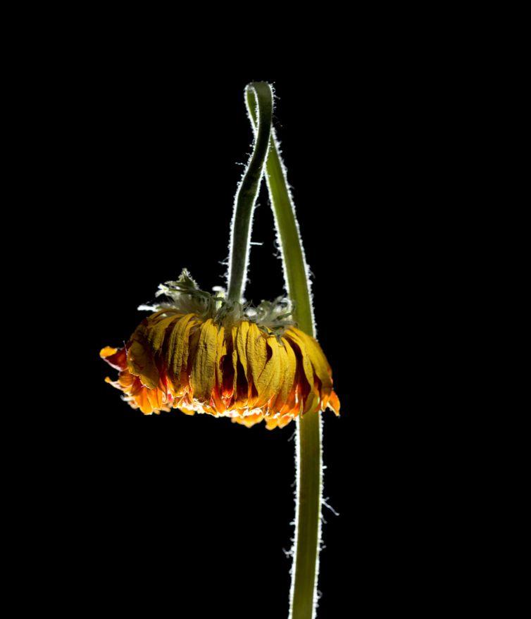 Bloemen verwelken